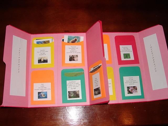 Lapbook de la classifiació dels animals