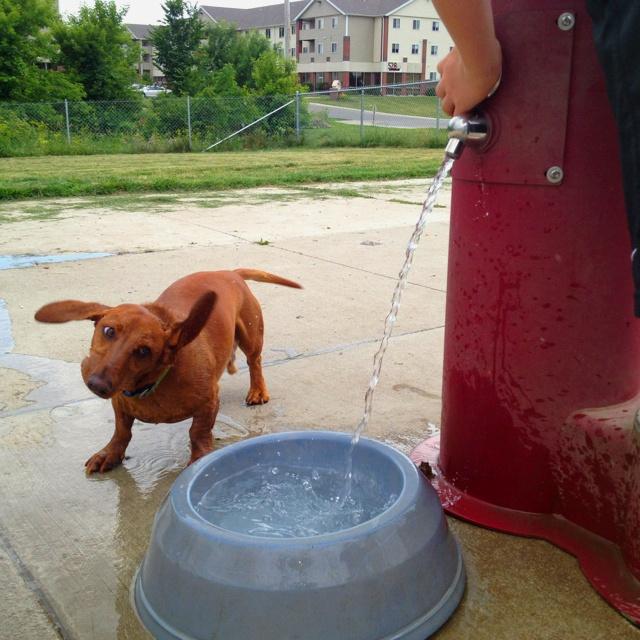 Loving the dog park