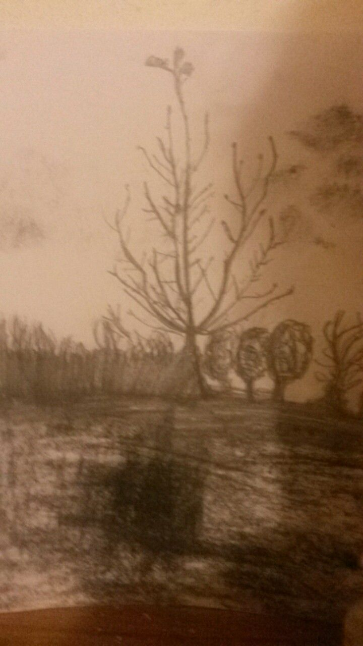 Forest(  fast drawing )