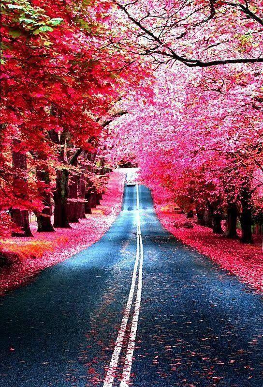 Quand le rose prend le dessus sur la nature, cela ressemble à de la magie, voici 53 images qui vous feront voir la vie en rose…