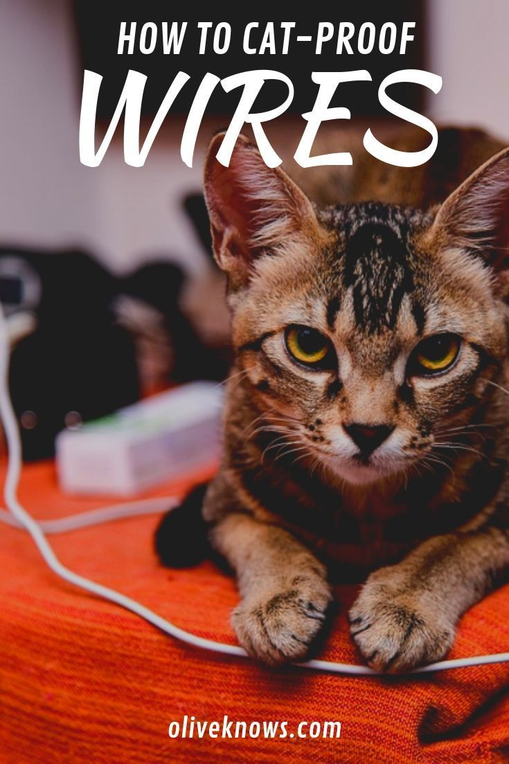 How To Cat Proof Wires Oliveknows Cat Training Cat Proofing How To Cat