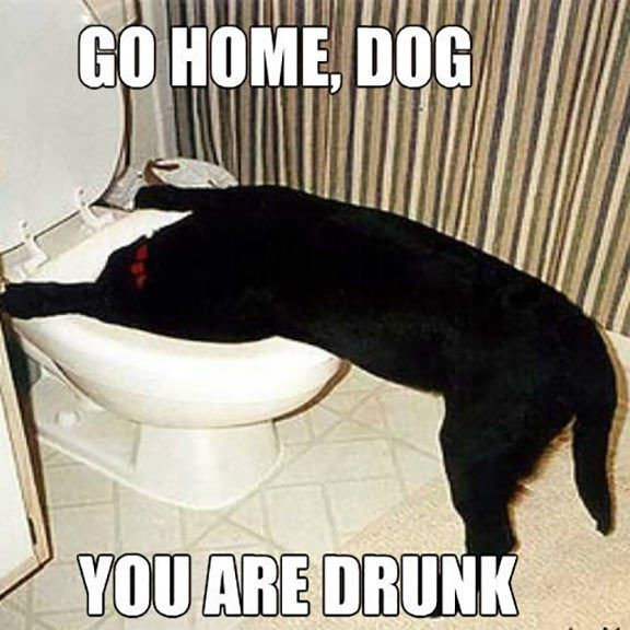 Funny Go Home You're Drunk Pics