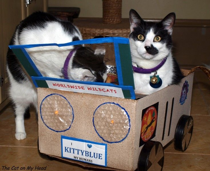 Mauricio and Pit Crew with his Cat Scouts cardwood derby entry! #cardwoodderby