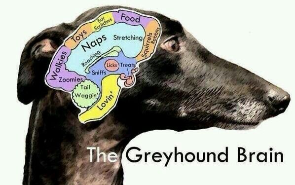 The greyhound brain - although I think roaching should be a larger part!