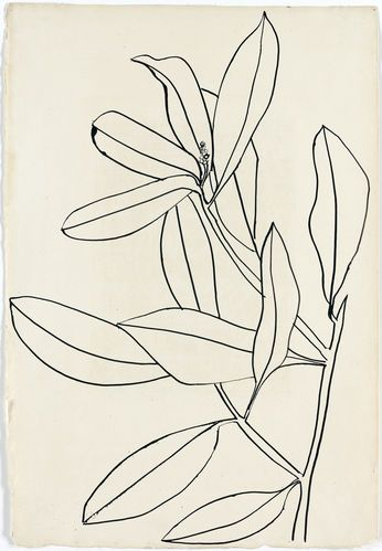 """Leaves, Ile St. Louis"" (1950) by Ellsworth Kelly. The artist collects drawings by greats such as Matisse and Picasso."
