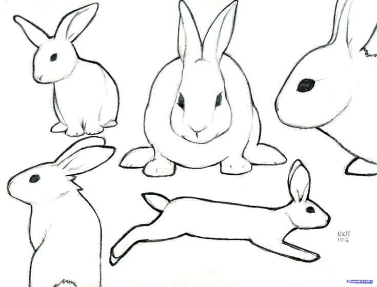 Line Drawing Rabbit : Awesome bunny rabbit drawing special picture colouring