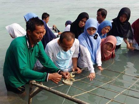 1.000 Bibit Mangrove Ditanam di Pulau Tidung