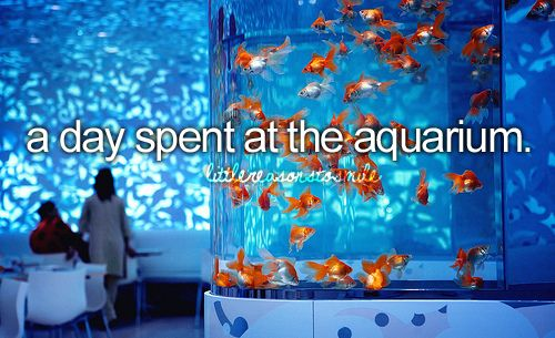 a day spent at the aquarium: Buckets Lists, Christian, Favorite Things, Fishi Tanks, Fish Tanks, Girly Things, Aquarium Fish, Dope Stuffrandom, Just Girly Summer Bucketlist