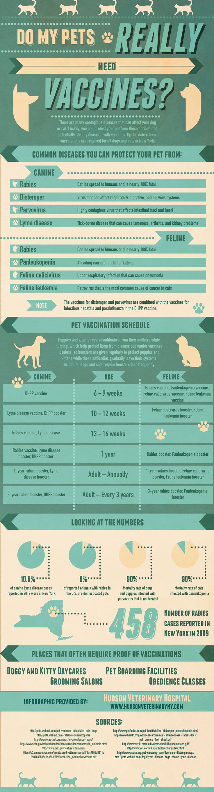 25 best Flea & Tick Educational Information images on Pinterest ...