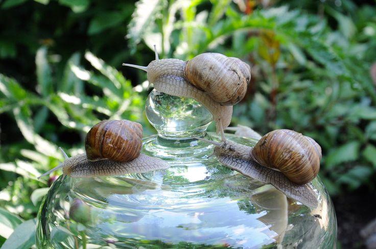 ReNika.cz: Stop the slugs
