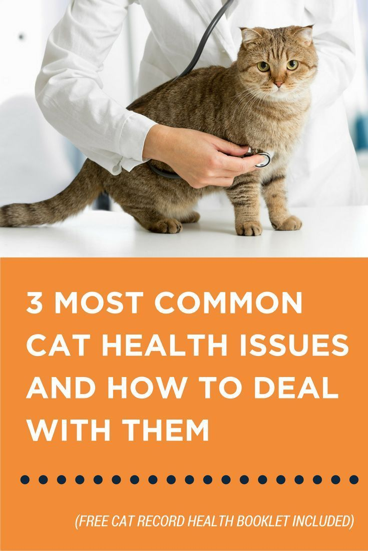 A Few Easy Tips And Tricks To Deal With Common Cat Health Issues Cat Training Cat Care Tips Cat Care
