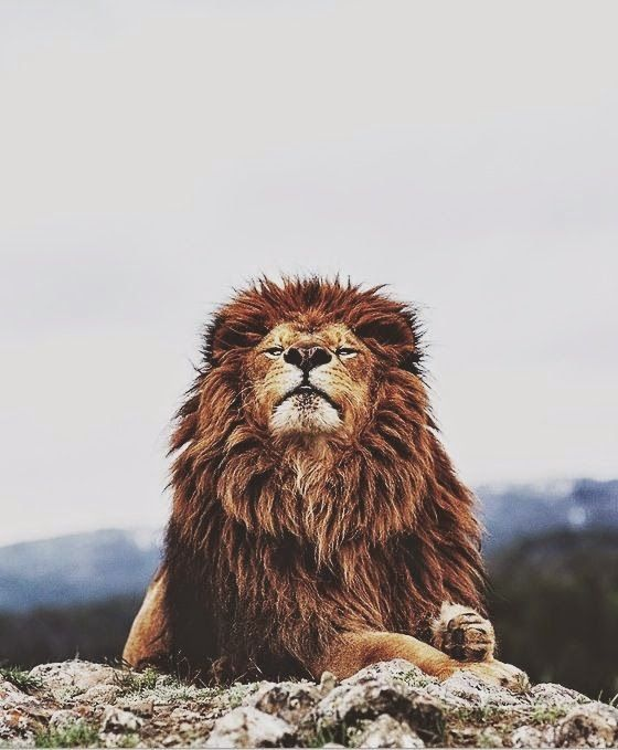 Oficina do Homem: 8 conselhos para melhorar sua presença de espírito...