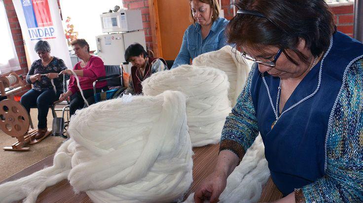 Mujeres crean la primera cooperativa en Magallanes para exportar tejidos con lana de oveja - El Magallánico (Comunicado de prensa)