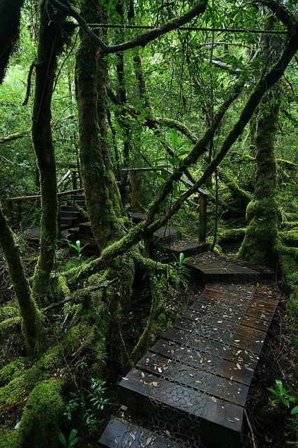 Trail in the Great Wilderness of Tasmania, Australia (by Eddy.H).