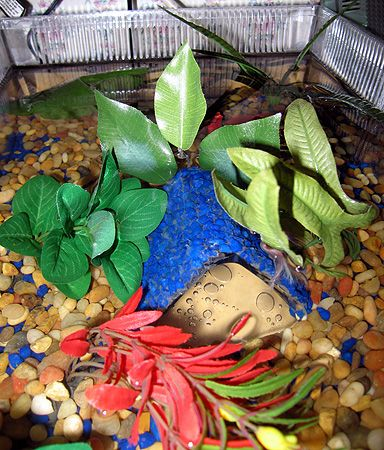 20 best images about betta fish care on pinterest caves for Betta fish care sheet