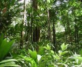 Ecological Problems: Amazon rainforest deforestation - The main causes