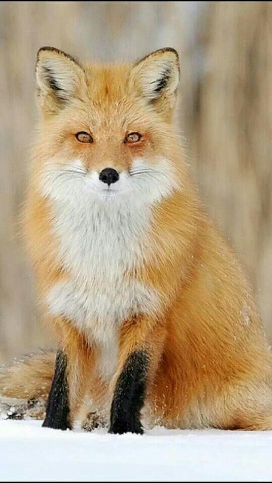 Mejores 225 imágenes de animali en Pinterest | Animales adorables ...