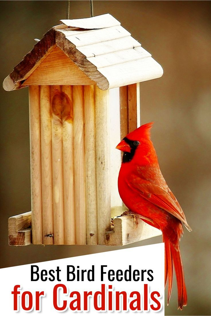 Great The Cardinal Bird Feeder   What Works Best | Garden Poolside | Birds, Cardinal  Birds, Bird Feeders