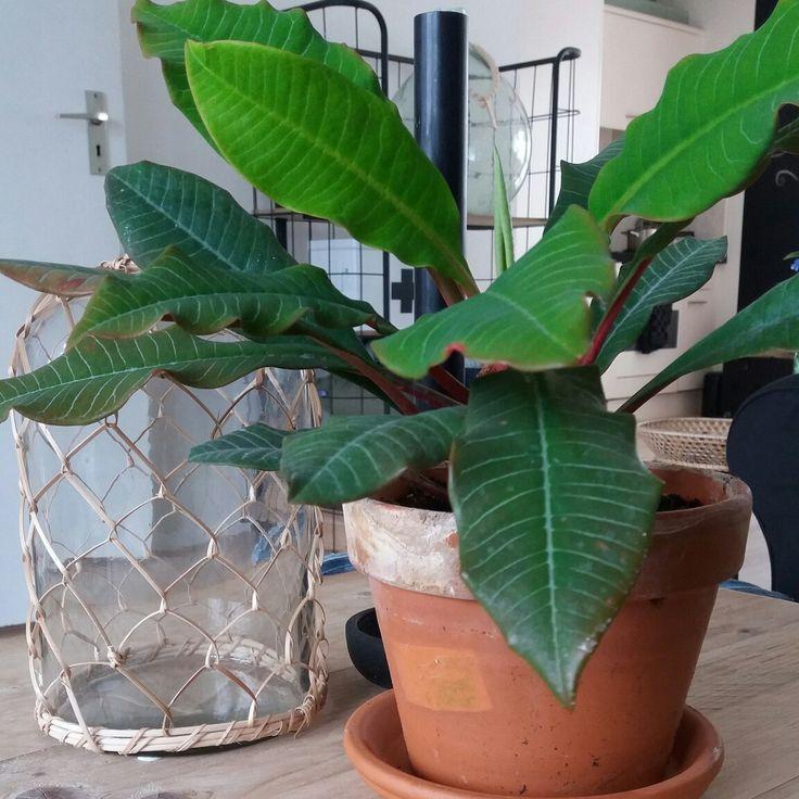 De tien geboden plant