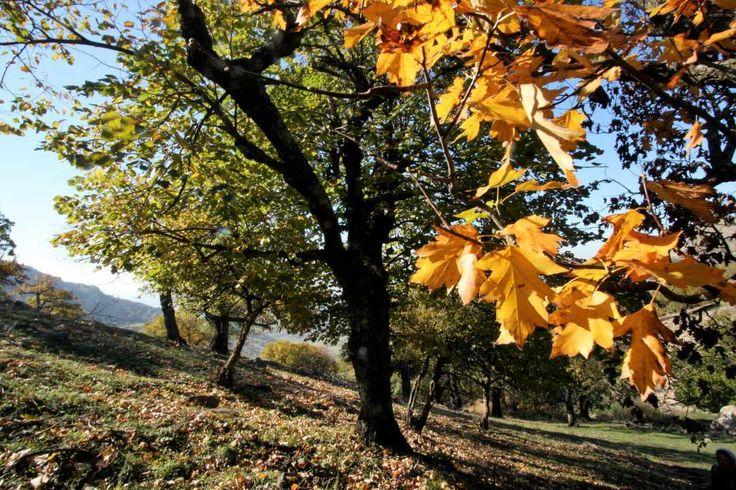 Dobrogea Mountains