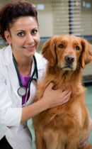 6 Tips to Manage Dog Shedding - VetInfo  Need this...Golden Retriever hair everywhere!!!!