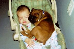 Baby and Boxer Love - this about sums it up! Boxers love their kids :)