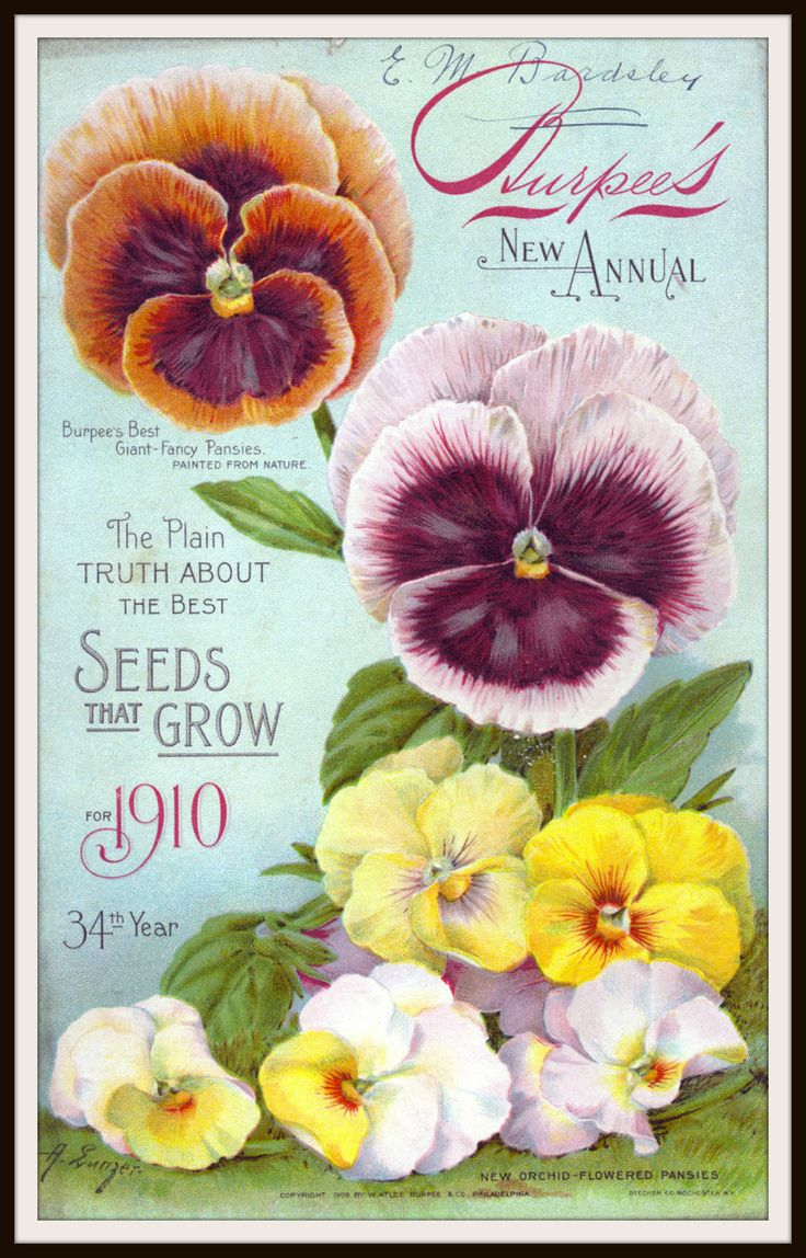 Vintage Reproduction Seed Pack Cover Art Print