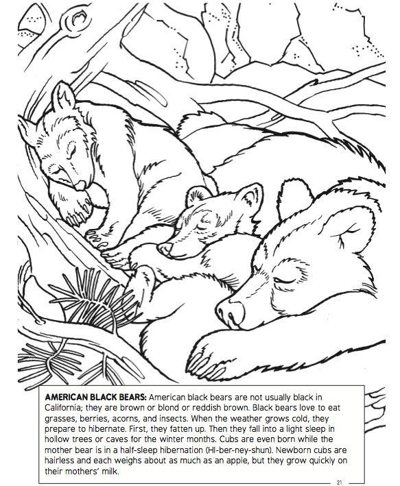 Sierra Adventure Coloring Book American Black Bears Page