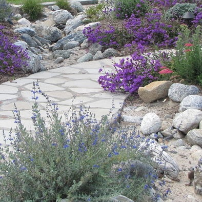 71 best dry river beds or water features images on for Drought resistant grass crossword clue