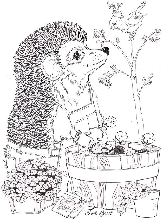 Top 10 Jan Brett Coloring Pages For Toddlers Spring Coloring Pages Earth Day Coloring Pages Animal Coloring Pages