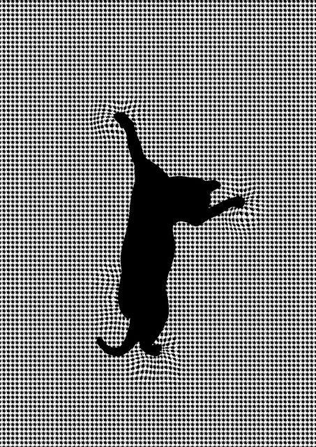 chat qui grimpe