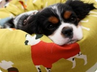 - The Snoogle Dog Bed from the Country Living Christmas Fair in London