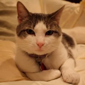 Anyone living with a cat knows cats not only purr when they are happy or contented, but when they are stressed, such as when at the vet. Did you know that purring also improves bone density and promotes healing! This may have led to the myth of nine lives for felines. Check it out.
