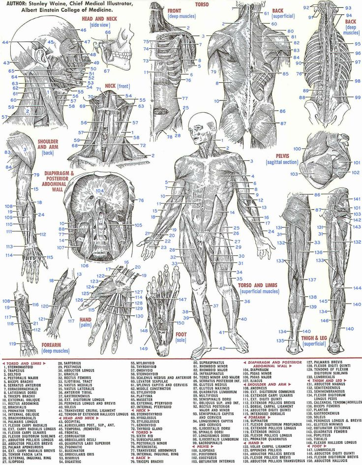 33 best Medical images on Pinterest | Human anatomy, Medical art and ...