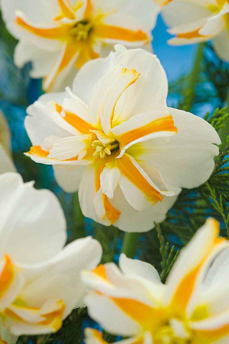 best Beautiful flowers images on Pinterest Beautiful flowers