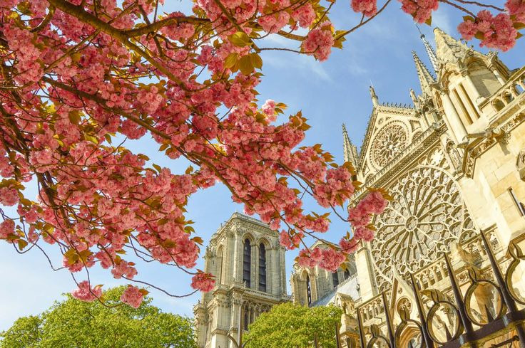 The Best Places to See Cherry Blossoms in Paris