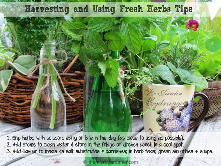 55 best herbs images on pinterest herbs garden herb gardening 11 more ways to use culinary and medicinal herbs every day to benefit your health and wellbeing in a sow simple guide to using herbs for health ebook fandeluxe Ebook collections