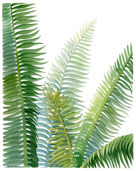 If you have a brown thumb these leaves will stay green forever. No need to water just frame and enjoy. Sit in your chair and enjoy your green plants, tropical vibes, and pretty decor.  Cycad Leaves Watercolor Print By Priscilla George