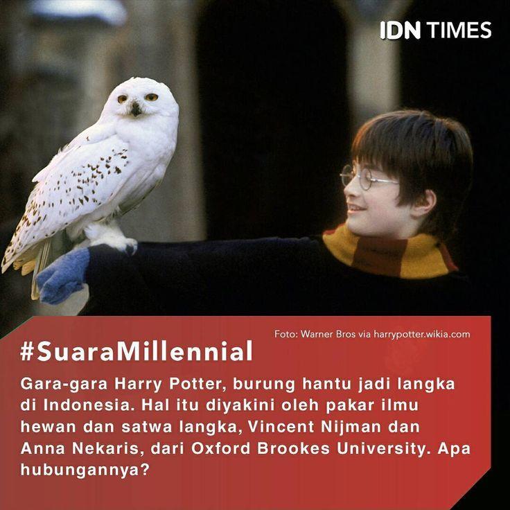 Gara-gara Harry Potter, Burung Hantu Jadi Langka di Indonesia ----- Follow @IDNTimes - The Voice of Millennials and Gen Z ----- Popularitas film dan buku Harry Potter berdampak buruk pada populasi burung hantu di Indonesia. Setidaknya itu yang diyakini oleh pakar ilmu hewan dan satwa langka, Vincent Nijman dan Anna Nekaris, dari Oxford Brookes University. ----- Burung hantu Harry Potter, Hedwig, memang terlihat lucu dan tampak jinak. Dalam penelitian yang dipublikasikan Global Ecology and…