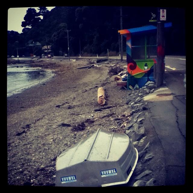Eastbourne around the bays, Wellington NZ