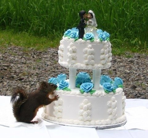 why cut wedding cake together 53 best squirrel images on drawing and dogs 27455