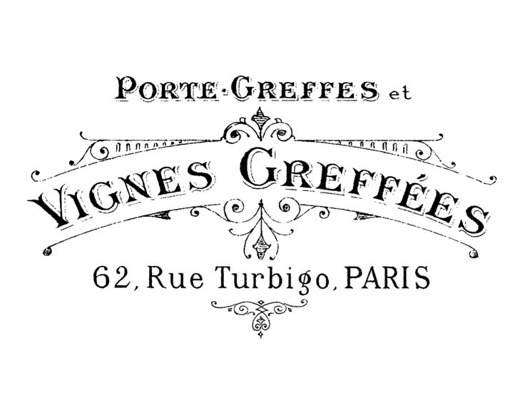 "French transfert ""Vignes greffées"""