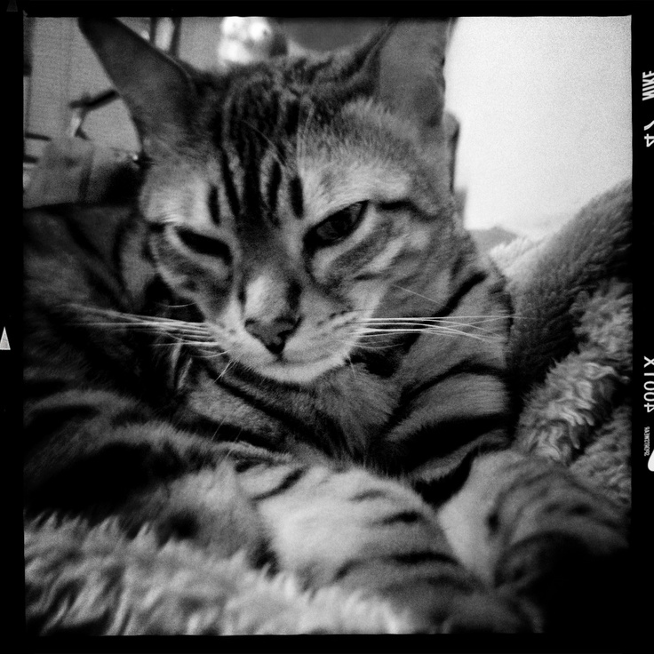 You woke me up for a photo!