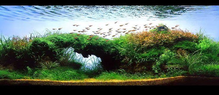 Aquascapes video