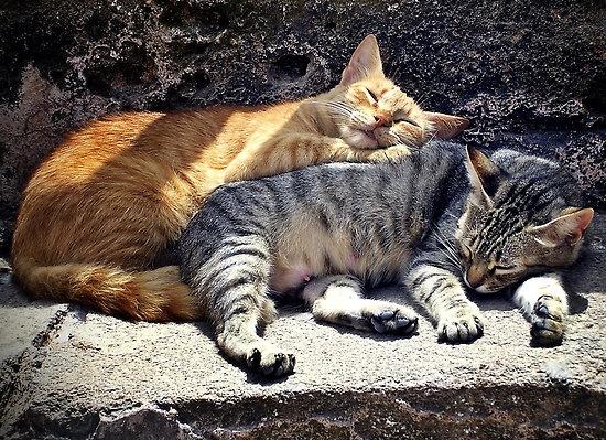 sleeping pair by agawasa: Aga Parker, Buy Sleeping, Casbah Coffee, Coffee Club, Greeting Card, Moroccan Adventures, Bela Veja, Cats Life
