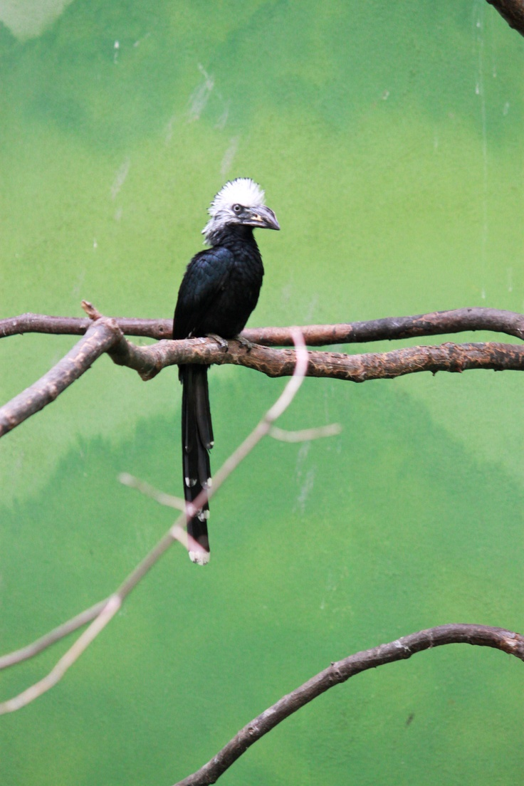 Www Bing Com1 Microsoft Way Redmond: 313 Best Images About The Bronx Zoo On Pinterest