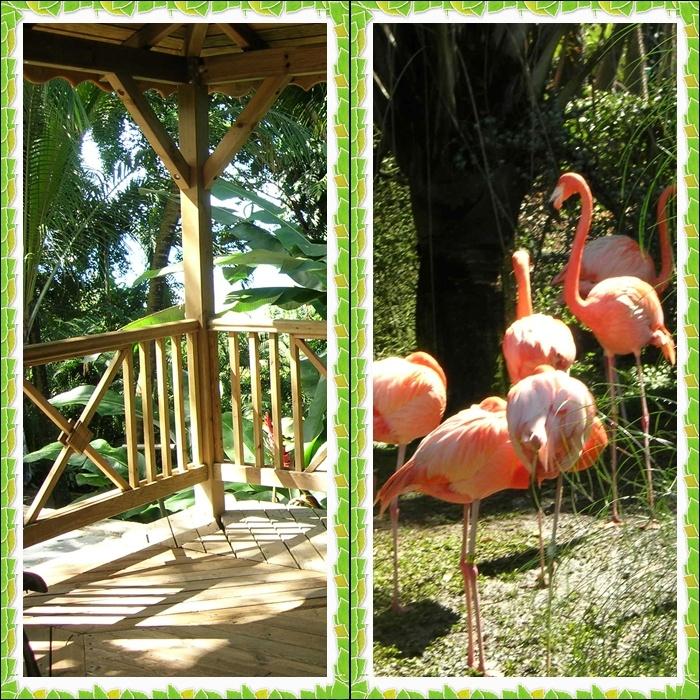 Jardin botanique Deshaies (Guadeloupe)
