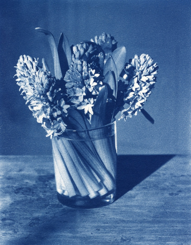 The sublime beauty of a John Dugdale cyanotype photograph.