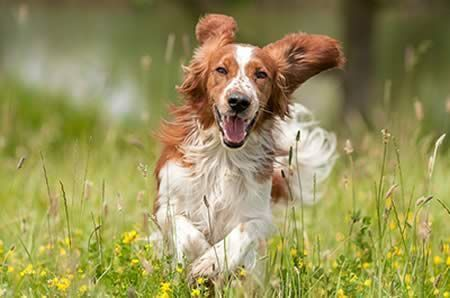 Reduce Dog Stress