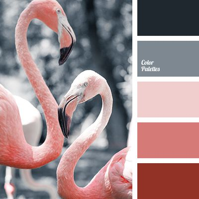 black, color of flamingo, color solution, coral, dark coral, dark gray, gray, light pink, pale coral, palette of colors, selection of color for repair, selection of colors, shades of coral.